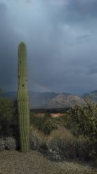 Tucson AZ Stock 44 by AshenSorrow