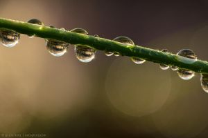 Holding on to the raindrops by isotophoto