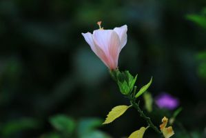 Late spring flower by mai-tran