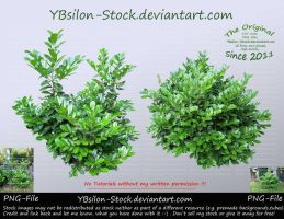 Green-Bushes by YBsilon-Stock by YBsilon-Stock