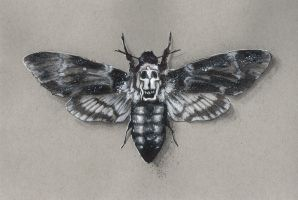 Death's Head Moth by Devin-Francisco