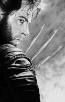 wolverine by thorn64