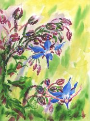 Borage by Lucidaelle