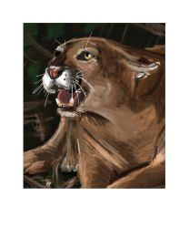 Florida Panther by thedarkcow