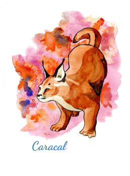 Caracal by Elica-Prin
