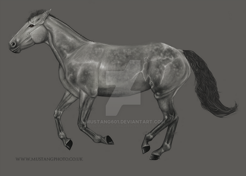 Grey horse by Mustang601