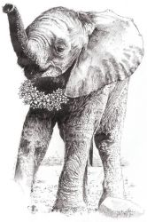 Baby African Elephant For Peace by lunelac