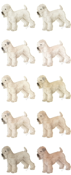 FP: IB: Soft-Coated Wheaten Terrier by iKadbury