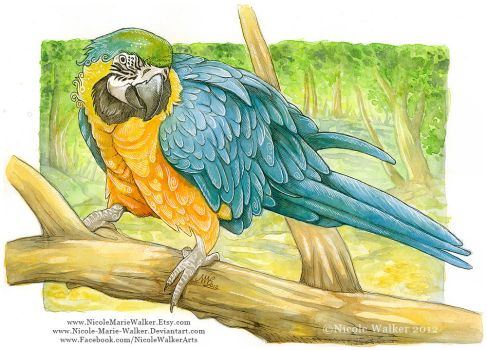 Colorful Macaw by Nicole-Marie-Walker