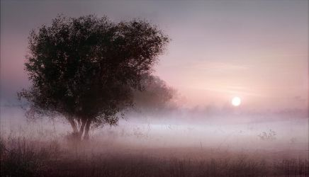 foggy morning by leventep