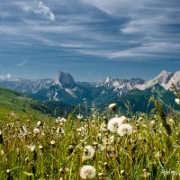Dandelion and the valley by rdalpes