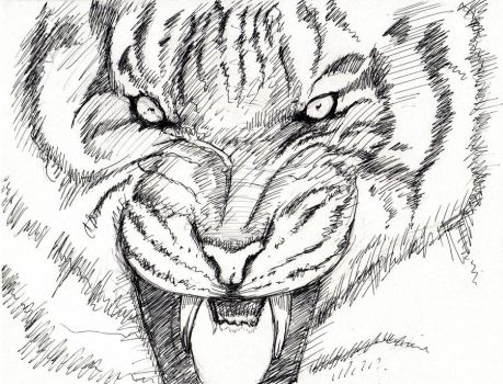 Siberian Tiger 30 by GraphicDensity