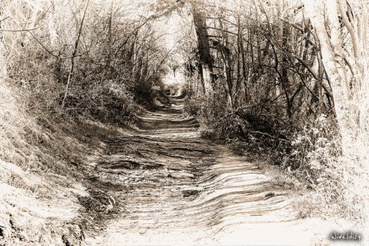 The Road in the woods 2 by wiwaldi24