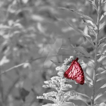 Red Butterfly by kacyface