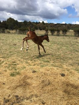Foal Stock Bucking by Lucid-Dimensions