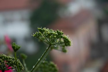 Green droplets by Lola22