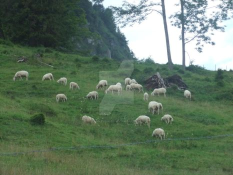Bavarian Sheep by Smileysheep
