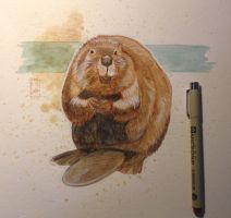 Today's watercolor sketch: Beaver by RM-WINCH