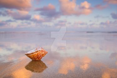 Dawn Seashell 2 by Spanishalex