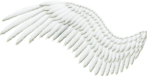 Feathered Wing - White by Thy-Darkest-Hour