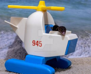 Sabbath - On Beach in Helicopter - 7171 by creative1978