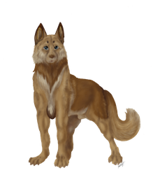 Jerico [dog] by casinuba