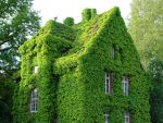 green house by Jack6677
