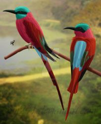Carmine Bee Eater by sam241
