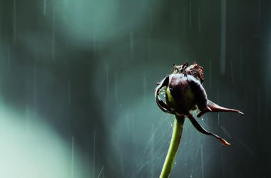 Withered in the rain... by CherishKay
