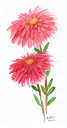 Asters by matildarose