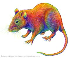 Colorful Chinese Zodiac Animals - Year of the Rat by rebeccawangart