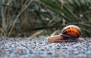 Snail by ScooterTheDog