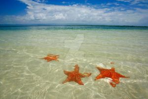 Bocas del Toro Starfish by Spanishalex