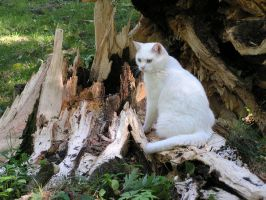 Cat with Broken Trunk 8 by loopyker-stock