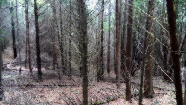 Ghostly woods by P3droD