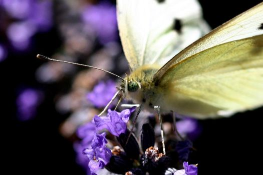 moth by scoot75