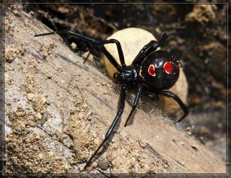 Black Widow 40D0041961 by Cristian-M
