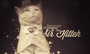 Sir Kitty by SoarDesigns