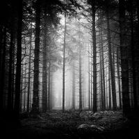 Forets by correiae