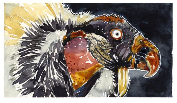 King Vulture by nash8808