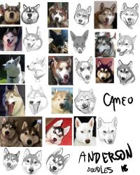 Animated Siberian Huskies by cameoanderson