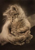 hand and cat by paullung