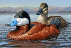 2015-2016 Federal Duck Stamp by Nambroth