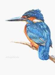 Kingfisher by Anna655