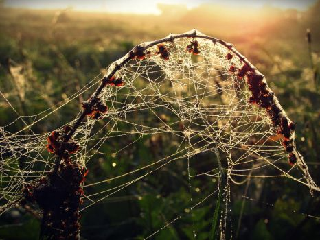 Spider's_web_in_morning by ImbierinisSausainis