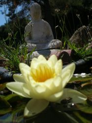 Lotus with Buddha Statue by 4ofClover