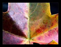 :: fall leaf II :: by synergia