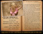 An Accounting of Aphrodite by Roysovitch