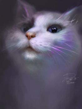My cat Bambie by BvloNue