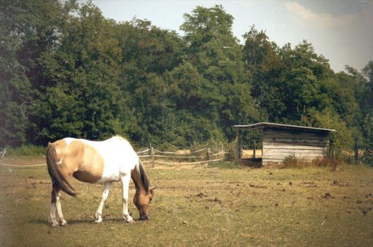 GIF - A horse in the meadow by turst67